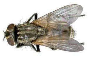 Truques de como eliminar mosquitos Casa e Jardim Controle de Pragas  mosquitos moscas